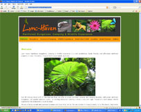 Lync Haven Rainforest Bungalows, Camping & Wildlife Experience - Cape Tribulation Accommodation